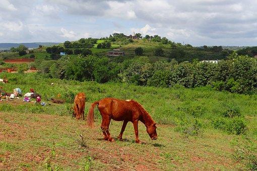 Pony, Pack Animal, Lambadi, Nomads, Nomadic Tribe