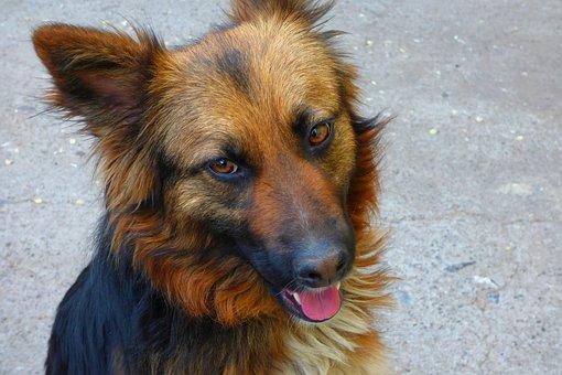 Dog, Pet, Animal, Animals, Bitch, Profile Dog, Puppy
