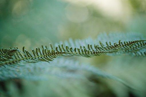 Fern, Green, Forrest Garden, Macro, Close, Detail