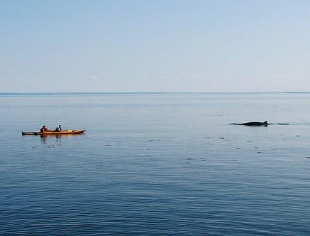Whale, Kayak, Nature, Marine, Watching, Kayaking