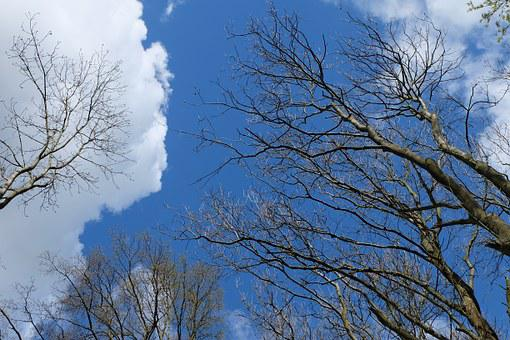 Treetop, Trees, Sky, Forest, Nature, Clouds, Canopy