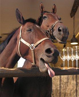 Pub, Horse, Bar, Old, Western, Hat, Background, Cowboy
