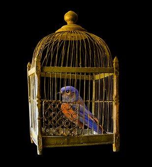 Cage, Gold, Bird, Prison, Imprisoned, Gilded, Caught