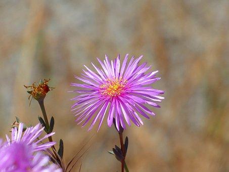 Flower, Pink Flower, Nectar, Petals, Plant, Nature