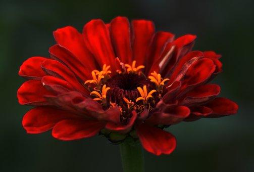 Flower, Red, Nectar, Red Flower, Garden, Blossom, Bloom