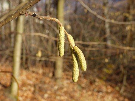 Plant, The Sapling, Nature, Sprig, Tree, Closeup, Macro