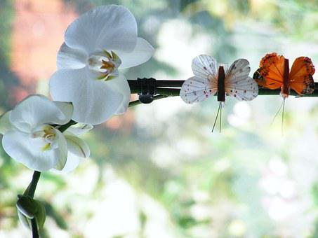 Orchid, Flowers, Butterfly, Orchis, Oriental Flower