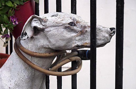 Dog, Tether, Leash, Model, Cruel, Bound, Restraint