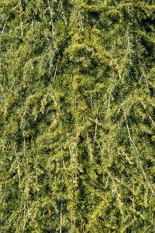 Texture, Green, Periwinkle, Tree, Road, Pine, Needles