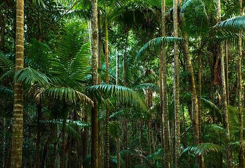 Jungle, Rainforest, Lines, Tree Trunks, Fern, Australia