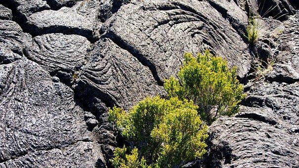 Lava Flow, Bush, Volcano, Reunion Island, Indian Ocean