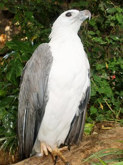 Eagle, Bird, Proud, Animal, Feather, Wildlife, Wing