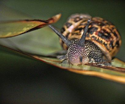 Snail, Macro, Garden, Nature, Spiral, Slime, Shell