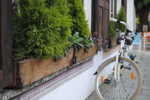 Bicycle, Plant, Europe, Cafe, Romantic, Old