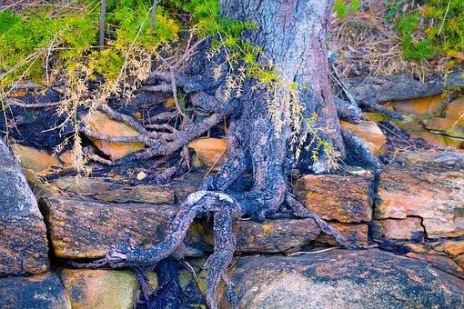 Tree, Bush, Fern, Nature, Landscape, Wilderness