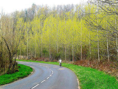 Transport, Bicycle, Trees, Road, Sports, Cyclist
