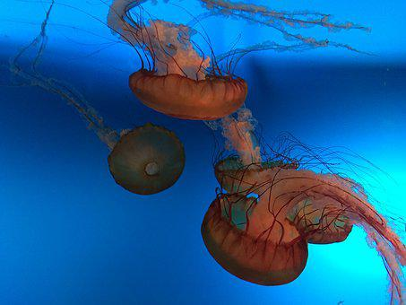 Jellyfish, Aquarium, Rest