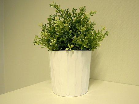 Plant, Houseplant, Plastic Flower, Green, Flower