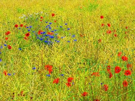 Wildflowers, Flower Meadow, Poppy, Cornflowers, Red