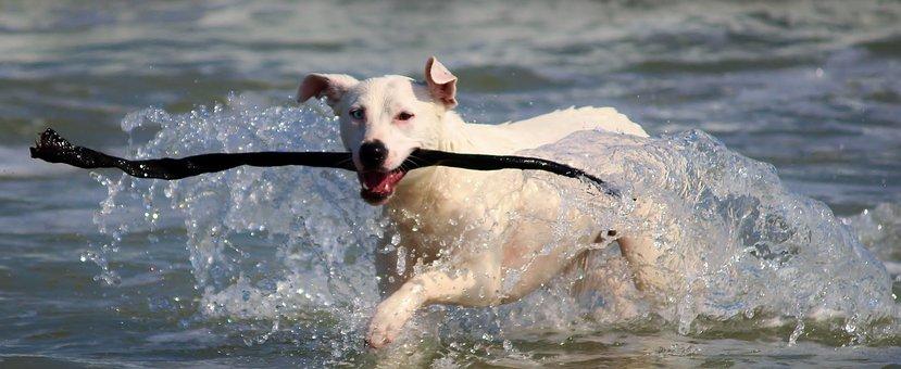 Dog, Sea, Ocean, Water, Swim, Inject, Batons, Play