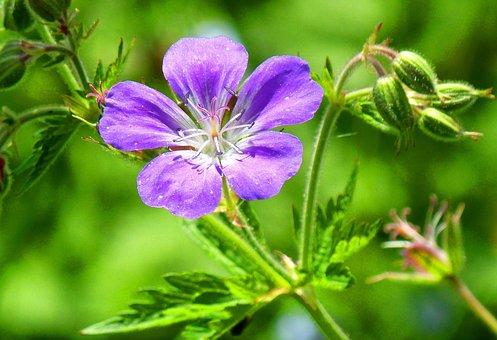 Flower, Detail, Nature, Mood, Purple, Green, Blossom