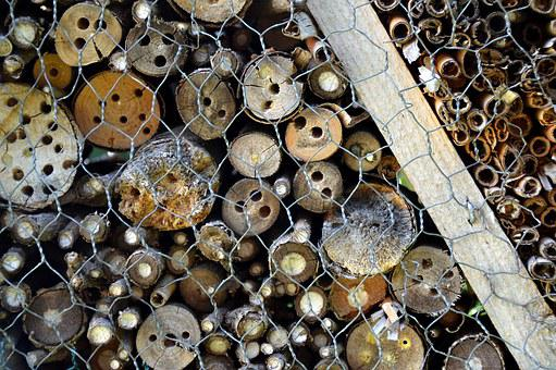 Insects Hotel, Wasp Building, Nature Conservation, Bio