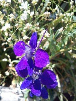 Clematis Spring, Flower, Nature, Springtime, Green