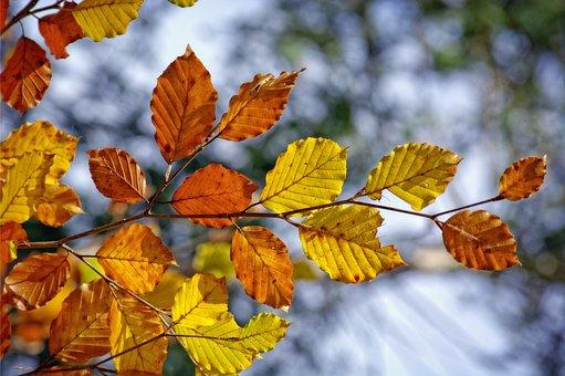 Autumn, Branch, Road, Leaves, Fall Leaves, Orange