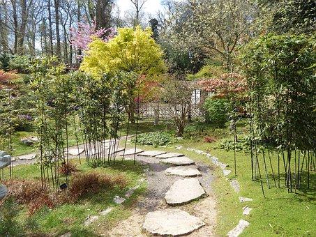 Kingston, Kingston Lacy, Uk, Nature, Tree, Trees, Path