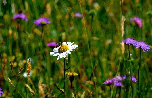Meadow, Mood, Nature, Flowers, Spring, Atmosphere