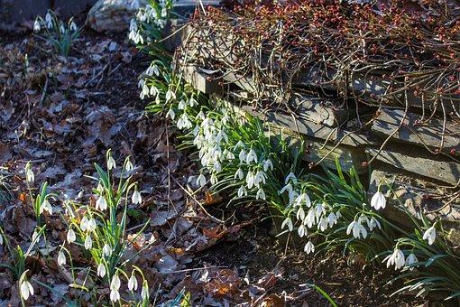 Spring Awakening, Spring, Flowers, Bloom, Close