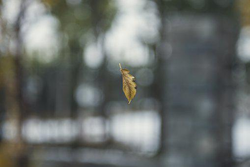 Defoliation, Autumn, Ppt Backgrounds, Scenery