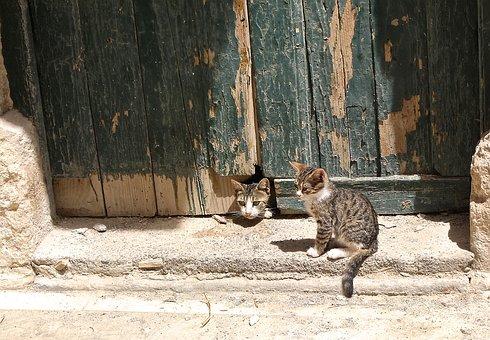 Cat, Play, Sun, Barn, Goal, Door, Lapsed, Weathered