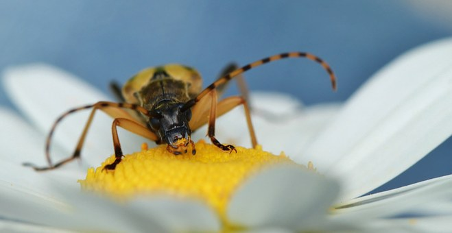 Insect, Nature, Macro, Animal, Flower, Blossom, Bloom