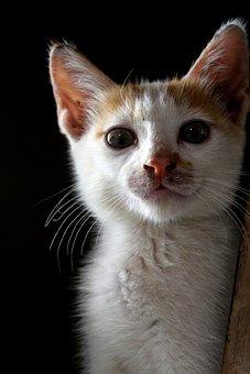 Cat, Kitten, Animal, Cute, Pet, Feline, Fur, Adorable