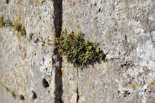 Wall, Plant, Stones, Fouling, Green, Grow
