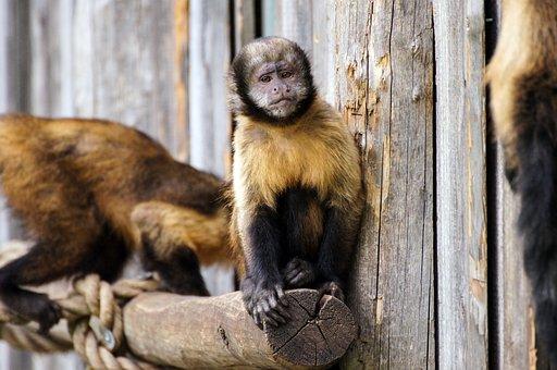 Monkey, Zoo, Sad, Animal, Animal World, Thoughtful