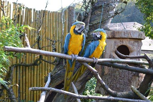 Ara, Parrot, Bird, Birds, Parrots, Yellow Breast