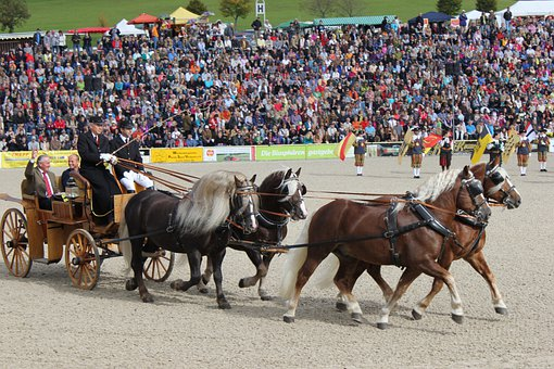 Marbach, Horses, Stallion Parade, Arena