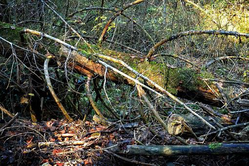 Environment, Nature, Damage, Forest, Storm, Tangle