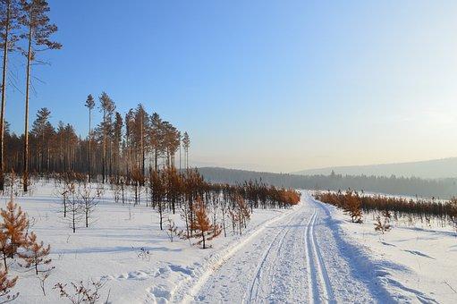 Winter, Siberia, Snow, Forest, Trees, Fringe