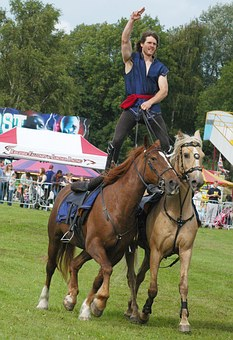 Horse, Trial, Horseback, Equitation, Paddock, Show