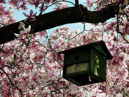 Aviary, Magnolia Tree, Magnolia, Spring, Flowers, Pink