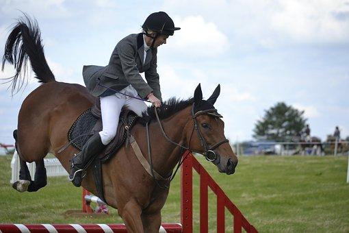 Horse, Jumping, Mahogany, Fence, Rider, Event