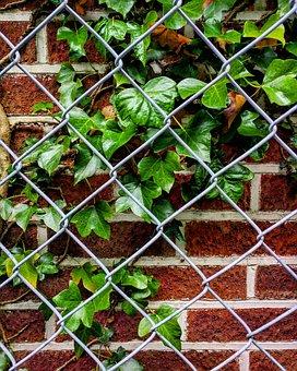 Ivy, Fence, Bricks, Brick Wall, Outdoor, Wall, Plant