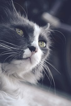 Cat, Speck, Green Eyes, Mustache, Longhair Cat