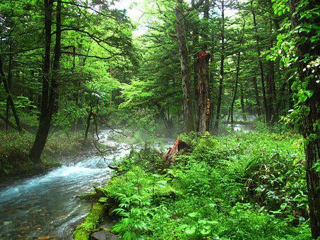 Kamikochi, Forest Bathing, Natural, Negative Ion, Woods