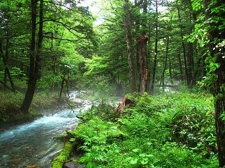 Kamikochi, Forest Bathing, Natural, Negative Ion, Woods