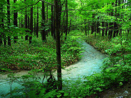 Kamikochi, Forest Bathing, River, Woods, Comfort