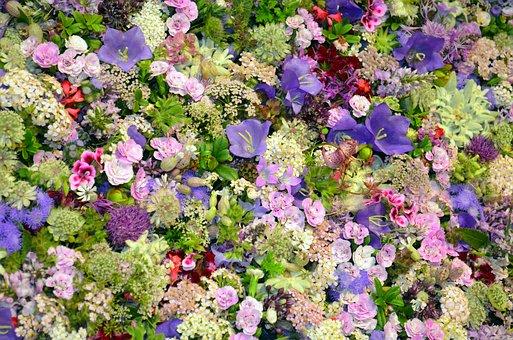 Blütenmeer, Floristry, Campanula, Purple, Pink